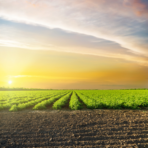 """An image of an agricultural field for our article """"Can I get an agriculture degree online?"""""""